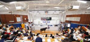 球磨家畜市場セリ市