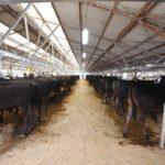 球磨畜産市場牛舎
