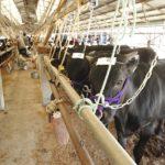 子牛セリ市情報
